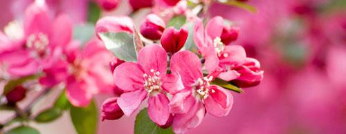 Friedhofsblumen pink